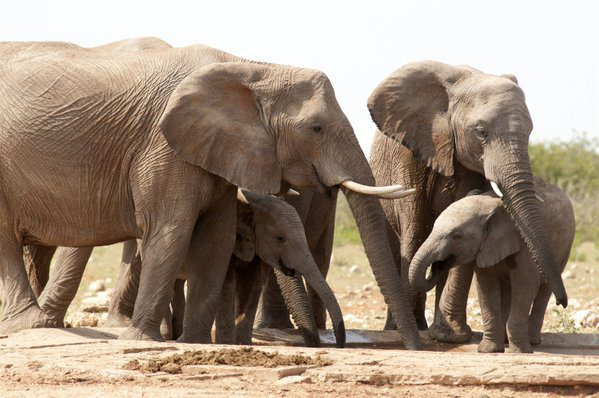 The Anthropocene and the End of Large Fauna? Will Political Scientists Show Up?